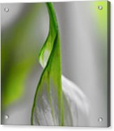 White And Green Acrylic Print