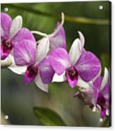 White And Purple Orchids Acrylic Print