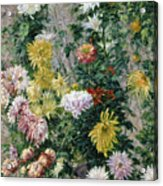 White And Yellow Chrysanthemums Acrylic Print by Gustave Caillebotte