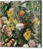 White And Yellow Chrysanthemums In The Garden At Petit Gennevilliers Acrylic Print