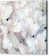 White Azaleas 1 Acrylic Print
