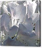 White Azaleas 2 Acrylic Print