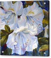 White Azaleas Acrylic Print