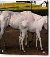 White Baby Horse Acrylic Print