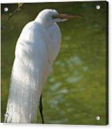 White Beauty Of The Marsh Acrylic Print