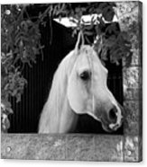 White Beauty - Series #5 Acrylic Print