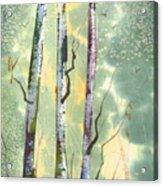 White Birch Acrylic Print