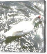 White Bird On Sparkly Water Acrylic Print