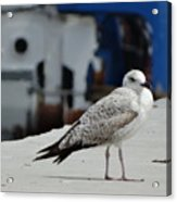 White Bird Port Burgas Acrylic Print