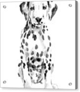 Dalmatian Dog Watercolor Painting, White Black Spotted Dalmatian Puppy Art Print Acrylic Print
