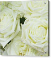 White Blooming Roses Acrylic Print