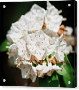 White Blooms Acrylic Print