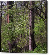 White Blossoms In The Woods Acrylic Print