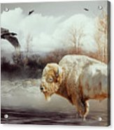 White Buffalo And Raven Acrylic Print