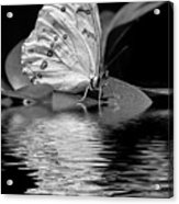 White Butterfly Bw Acrylic Print
