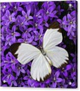 White Butterfly On Campanula Get Mee Acrylic Print