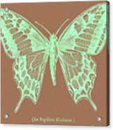 White Butterfly Swallow Tail Le Papillon Machaon Acrylic Print