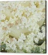White Cabbage Acrylic Print