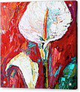 White Calla Lilies Oil Painting Acrylic Print