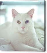 White Cat Laying On Comfy Bed Acrylic Print