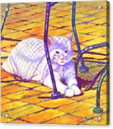 White Cat On Patio Acrylic Print