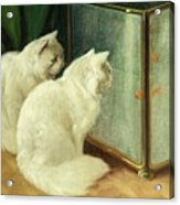 White Cats Watching Goldfish Acrylic Print by Arthur Heyer