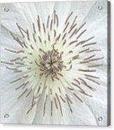 White Clematis Flower Garden 50121b Acrylic Print
