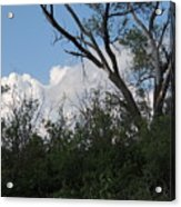 White Clouds With Trees Acrylic Print