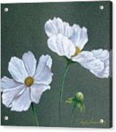 White Cosmos Acrylic Print