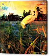 White Cranes Acrylic Print
