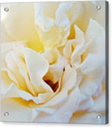 White Creamy Pastel Rose Flower Baslee Troutman Acrylic Print