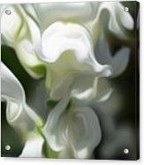 White Creamy Peaceful Acrylic Print