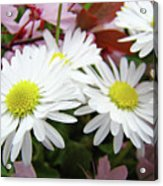 White Daisy Floral Art Print Canvas Pink Blossom Baslee Troutman Acrylic Print