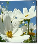 White Daisy Flowers Fine Art Photography Daisies Baslee Troutman Acrylic Print