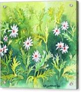 White Daisys Acrylic Print