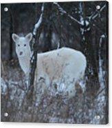 White Deer In Winter Acrylic Print