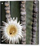 White Desert Jewel Acrylic Print