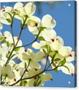 White Dogwood Flowers 1 Blue Sky Landscape Artwork Dogwood Tree Art Prints Canvas Framed Acrylic Print
