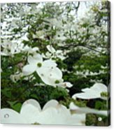 White Dogwood Flowers 6 Dogwood Tree Flowers Art Prints Baslee Troutman Acrylic Print