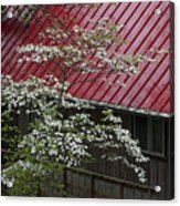 White Dogwood In The Rain Acrylic Print