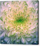 White Dream Acrylic Print