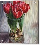 White-edged Red Tulips Acrylic Print