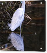 White Egret And Reflection Acrylic Print