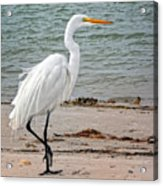 White Egret On Beach Acrylic Print