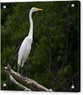 White Egret-signed-#0493 Acrylic Print