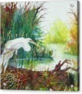 White Egret Swamp Acrylic Print