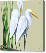 White Egrets And White Lillies Acrylic Print