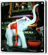 White Elephant. Meaning A Big Expensive Acrylic Print