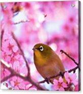 White Eye Bird Acrylic Print by masahiro Makino