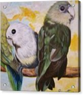 Chloe The    Flying Lamb Productions           White Faced Lovebirds Acrylic Print
